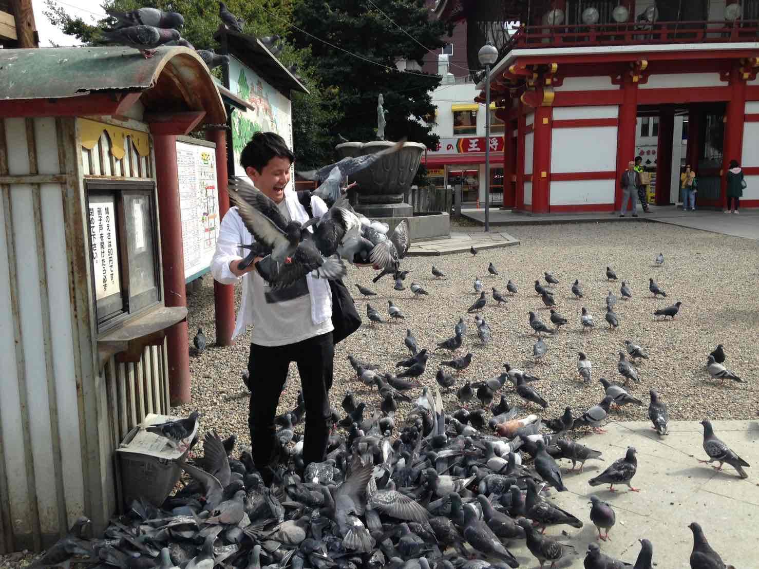 鳩に囲まれて驚く