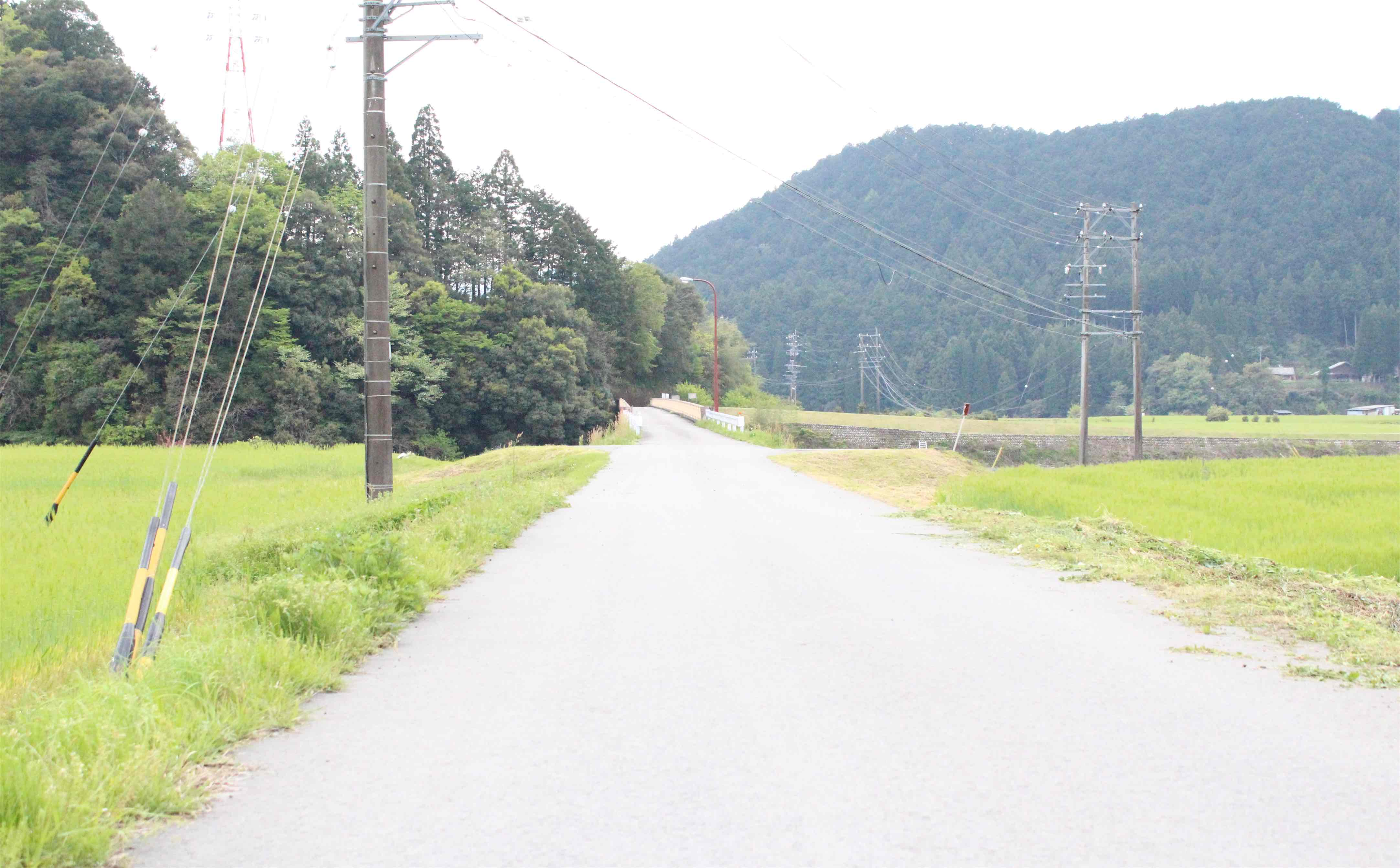 のどかでいい景色in郡上八幡の県道