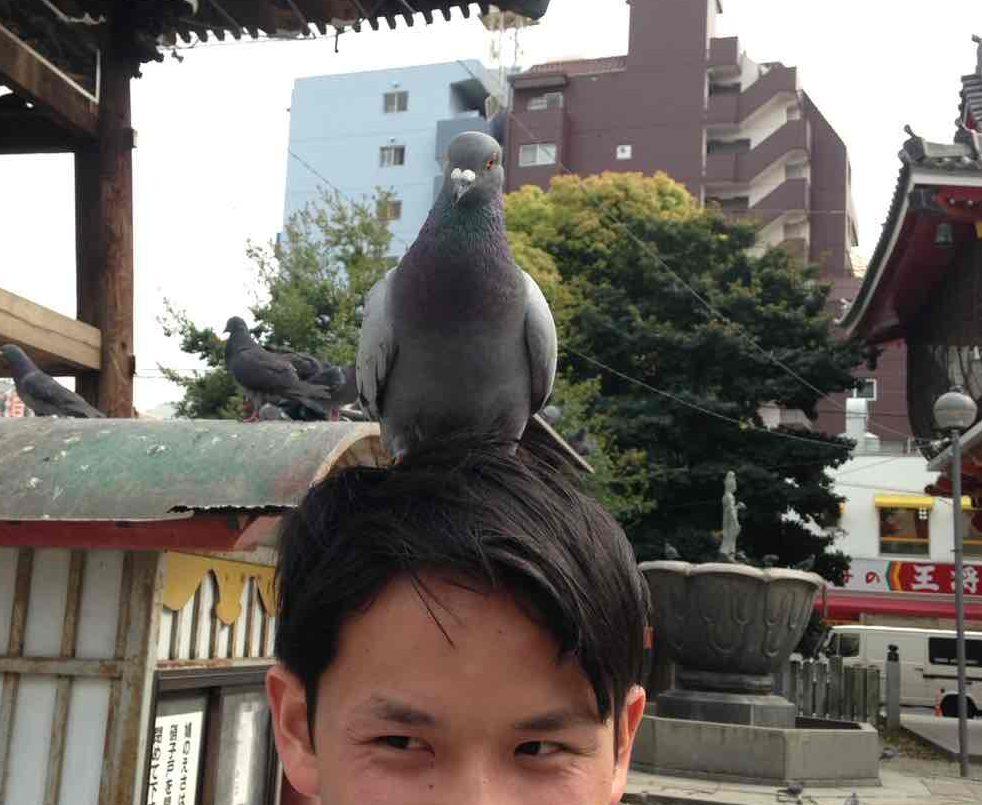鳩が頭上に乗っている
